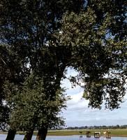 8b_Binsey_poplars_8b.jpg